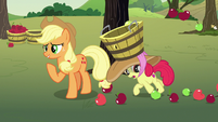 Apple Bloom tripping over fallen apples S7E9