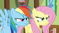 Fluttershy and Rainbow glaring at Zephyr S6E11.png