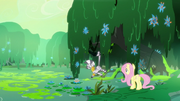 Fluttershy and Zecora in the swamp S7E20