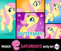 Fluttershy wallpaper 1920x1600.jpg