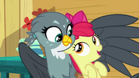 Apple Bloom starts singing to Gabby S6E19