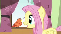 Fluttershy greeting Constance S6E11