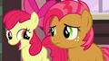 Apple Bloom 'And we've got a really big surprise' S3E04.png