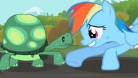 Rainbow Dash y Tank (Broohoof)