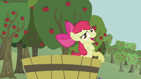 Apple Bloom 'that's silly' S2E05