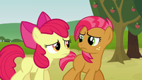 Apple Bloom and Babs looking unhappy S3E08