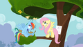 Chicks flying in circles on Rainbow Dash's head S4E04.png