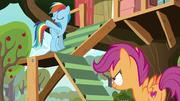 "Rainbow Dash ""throw 'em off a cliff"" S8E20"
