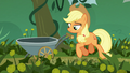 Applejack begins her field work S5E16.png