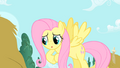 Fluttershy rubbing her hooves S1E17.png