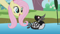 Fluttershy with a duck S1E03.png