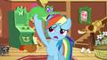 Gummy on Rainbow Dash's mane S03E13.png