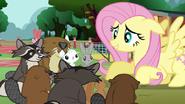S03E05 Fluttershy mówi do zwierząt