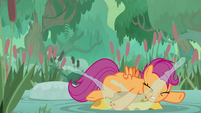 Scootaloo falls on a bufogren's head S9E22
