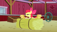 Apple Bloom about to say -Manehattan!- S3E08