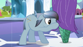 Crystal stallion taking a peek under the curtain S3E2.png