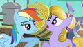 Rainbow Dash harasses Amber Waves S3E01.png