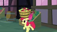 Apple Bloom walks with apple bucket on her head S8E12