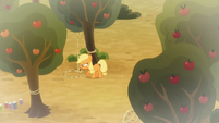 Applejack checking her snare trap S9E10