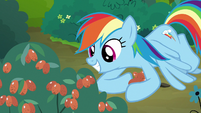 Rainbow Dash picking red berries S7E16