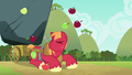 Apples falling on Big McIntosh's head S6E15.png