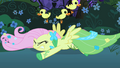 Fluttershy trying to catch some ducks S01E26.png