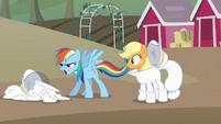 Rainbow e Applejack procurando outro desafio ousado T4E03