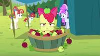 Apple Bloom in an apple bucket S5E17