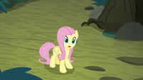 Fluttershy -what just happened-- S8E13