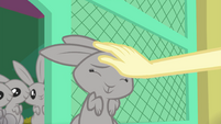 Fluttershy rubbing Mr. Bouncy's head EGSB