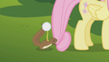 Squirrel tugs Fluttershy's mane S1E10.png