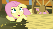 Fluttershy -a few pieces of hay- S5E21
