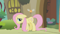 Fluttershy embarrassed S1E10.png