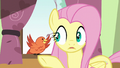 Fluttershy surprised by Constance's message S6E11.png