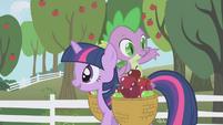 Spike eligiendo mas manzanas