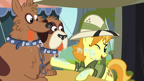 Daring Do collector stops orthros from licking her S4E22