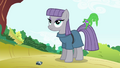 Maud Pie with Gummy biting on her tail S4E18.png