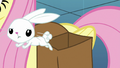 Angel Bunny hops out of Fluttershy's bag S8E2.png
