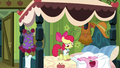 Apple Bloom 'Too casual' S3E4.png