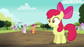 Apple Bloom hears Scootaloo S5E17.png