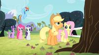 Applejack looks up to the apple tree S4E07