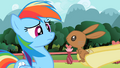 Bunny looking at Rainbow Dash S2E07.png