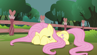 Fluttershy doesn't want to look S3E05