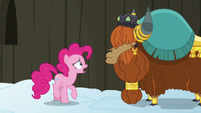 "Pinkie Pie confused ""yak not?"" S7E11"