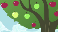Apple tree shaken S4E13
