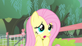Fluttershy 'but I do not want to perform' S4E14.png
