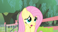 Fluttershy 'but I do not want to perform' S4E14
