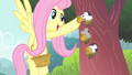 Fluttershy giving cheeses to mouses S4E14.png