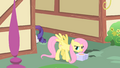 Fluttershy picks up the cake S1E25.png