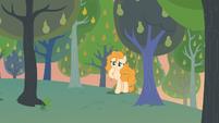 Pear Butter finding a cute scene S7E13